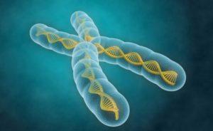 ген старости